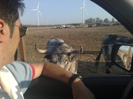 Tour in Vejer de la Frontera